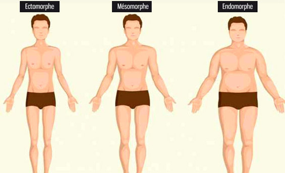 Morphotypes musculation